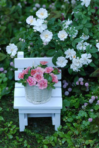 white chair and little flowers - Petit Garden