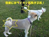 ご無沙汰です・・・(^^;) - もももの部屋(家族を待っている保護犬たちと我家の愛犬のブログです)
