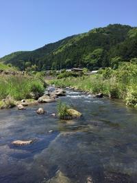 五月の渓流 - (鳥撮)ハタ坊:PENTAX k-3、k-5で撮った写真を載せていきますので、ヨロシクですm(_ _)m