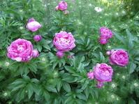 今日も庭にいます。 - 花の自由旋律