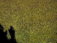 キラキラ、針畑川・・・☀ 朽木小川・気象台より - 朽木小川・気象台より、高島市・針畑郷・くつきの季節便りを!