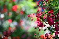 Garden Necklace YOKOHAMA 2017(10) - 今日の小さなシアワセ