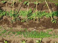 野菜の苗を植えた話とか - 満たされぬ思い、日々の出来事