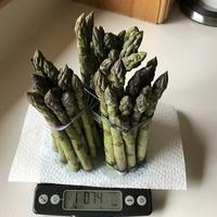 Asparagus (アスパラガス) - ファルマウスミー