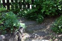 ヒメウツギ - 小さな森のキキとサラ