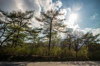 リベンジ・妙義軽井沢山岳ライド その4 〜「奇跡のダウンヒル」〜 - ゆるゆる自転車日記♪