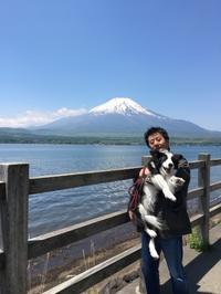 山中湖 - 犬とお散歩