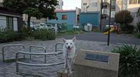 Vol.1184 南二ッ谷公園 - 小太郎の白っぽい世界