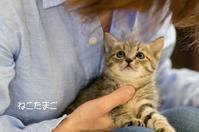 ねこたまごの保護猫 げんきとひなた - ekkoの --- four seasons --- 北海道