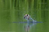 ツバメの水浴び - Slow Life is Busy