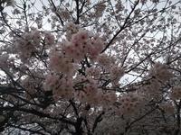 桜ニコ - ニコニコブログ