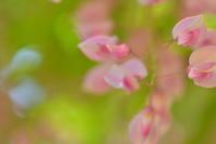 2017年5月 春日大社萬葉植物園 - instantane
