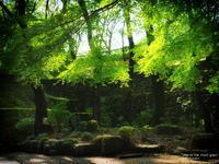"""May of the fresh green"" - ~まきち写真工房~"