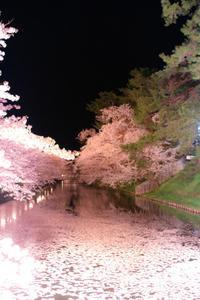 圧倒的桜。。。。 - 晴れの日も。。。