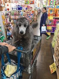可愛いお客様 - 輸入犬用品・雑貨 DOGPLANETのBlog