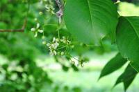 マユミの花、雀、ホオジロなど - ぶらり散歩 ~四季折々フォト日記~