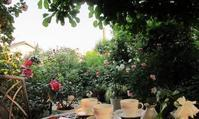 2017薔薇のお庭 - リリ子の一坪ガーデン