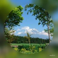 ②芝桜の旅「朝霧高原から富士山」2017.5.19 - わたしの写真箱 ..:*:・'°☆