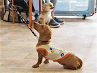 犬のしつけ方教室 5/20 - SUPER DOGS blog