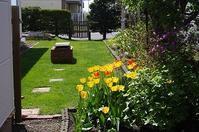 庭の花々 - 北緯44度の雑記帳