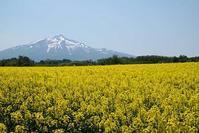 お山と花と - へっぽこな・・