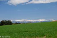 新緑のマイルドセブンの丘から~5月の美瑛 - My favorite ~Diary 3~