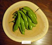ソラマメ初収穫、茹でてビールのつまみに(5・17) - 北鎌倉湧水ネットワーク
