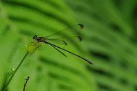 山原遠征 その3 - 蝶と蜻蛉の撮影日記