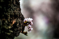 咲くさ。 - 名もなき道