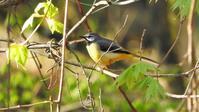 柳沢峠 - 山と鳥を愛するアナパパ
