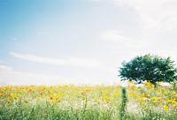 万博の花の丘 - photomo