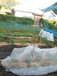 畑の水やりと石井桃子の本 - ご機嫌元氣 猫の森公式ブログ
