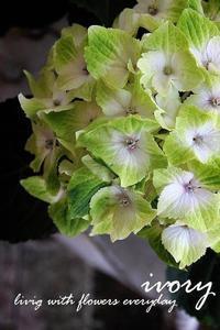 IVORYカフェ -  Flower and cafe 花空間 ivory (アイボリー)