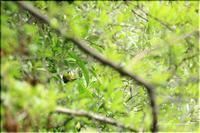 いつもの公園の野鳥と薔薇 Ⅰ - 今日のいちまい