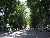Tokyo Travel Guide Kichijoji Sightseeing 100 -003 Zelkova Tree-Lined Street  Seikei University - FASHIONSCAPE-TOWNSCAPE