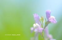 可愛い野草たち - 花々の記憶