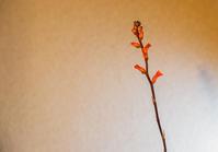 開花 - 気まぐれPhoto Life