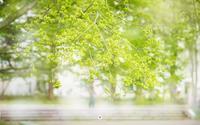 新緑のcampus - ユルリ ユルリト。