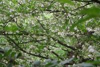 小満のころ(5/21~6/4)宮迫で咲く花 - 宮迫の! ようこそヤマボウシの森へ