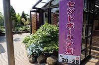 『セントポーリア展』開催中~♪ - 手柄山温室植物園ブログ 『山の上から花だより』