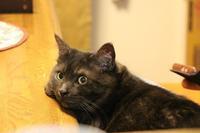 癒しポーズ - ぎんネコ☆はうす