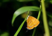 初夏 その2 - 紀州里山の蝶たち