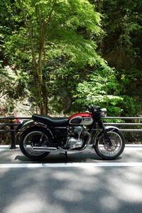 若葉の頃に - 疾風谷の皿山…陶芸とオートバイと古伊万里と