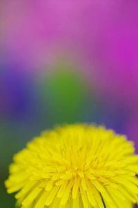 5月20日 今日の写真 - ainosatoブログ02