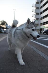 朝んぽ通信 ~行け行けゴーゴー号~ (^o^) - 犬連れへんろ*二人と一匹のはなし*