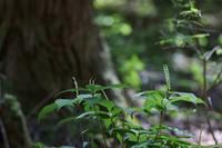 森の中の夢舞台     ≪   フタリシズカ   ≫ - そよ風のつぶやき