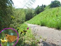 ヒメキマダラセセリ初見 - 秩父の蝶
