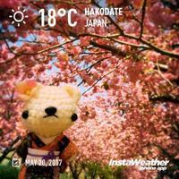 [あみぐるみお出かけ] 石崎地主海神社の桜と入舟祭り♪ - Smiling * Photo & Handmade 2