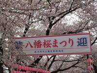 くま太 八幡市に桜を見に行く - Teddyのごはん