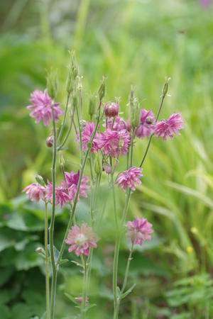herb,harvest - 浮世如夢